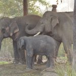 elephant breeding centre Bardia National Park