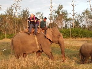 elephant safari bardia national park