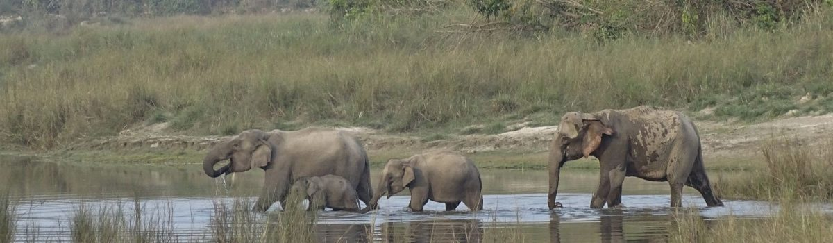 elephantgroup Bardia National Park