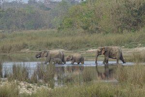 elephantgroup Bardia National Park