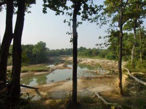 riverine forest Bardiya National Park