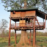 Treehouse Bardia National Park Nepal