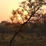 Sunrise Treehouse Bardia National Park