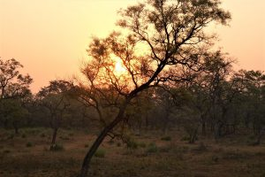 Sunrise Treehouse Bardia National Park