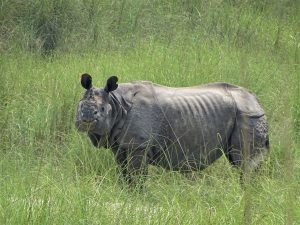 Rhino Bardia National Park