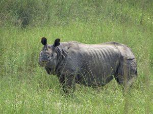 Rhino Bardia National Park